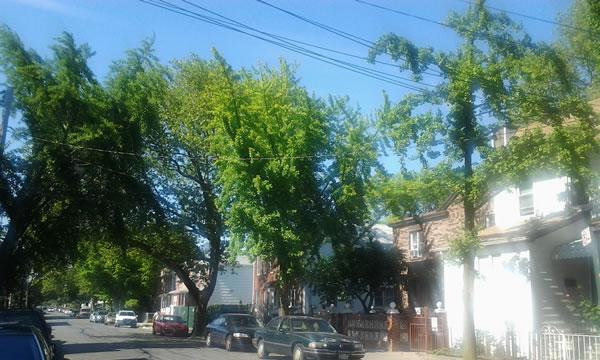 Ave U and 86 Street Brooklyn NY Russian NY 2012